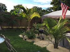 rent plants, palm trees, buy palm trees, rent palm trees, palm trees in new england, palm trees in new york, plant storage