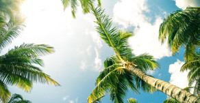 Palm Tree Uses
