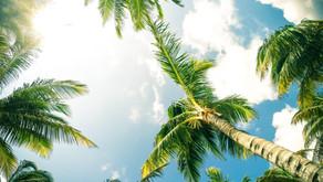Palm Tree Uses
