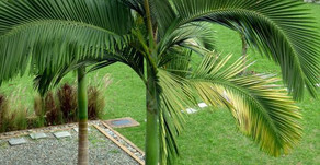 Fastest Growing Palm Trees