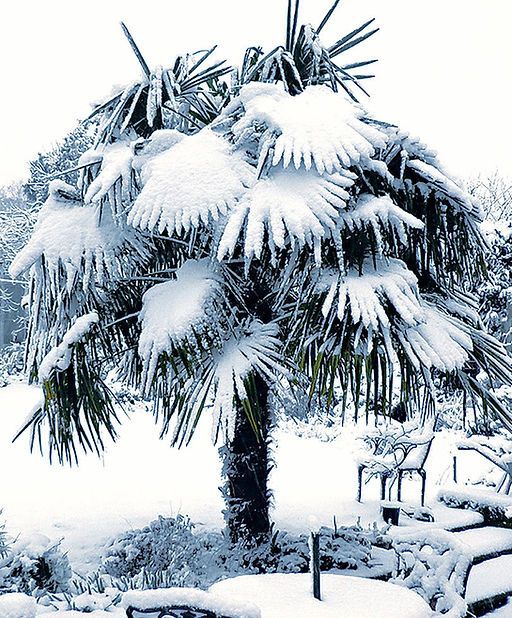 buy tropical plants, palm trees, buy palm trees, rent palm trees, cold hardy palm tree, wnter storage, plant storage, palm trees for sale