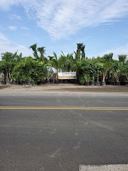 Garden Center In CT, plant nursery in CT, buy tropical plants, best garden center in CT