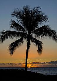 buy tropical plants, Buy palm trees, Palm Tree Rental, Tree Rental, event rental, palm trees in NY, sell palm trees, plant storage, palm trees for sale