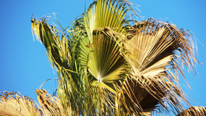 How To Care For Your Sick Palm Tree