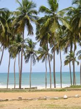 coconut palm tree at the beach,