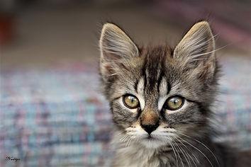 Auteur chanson Petite chatte