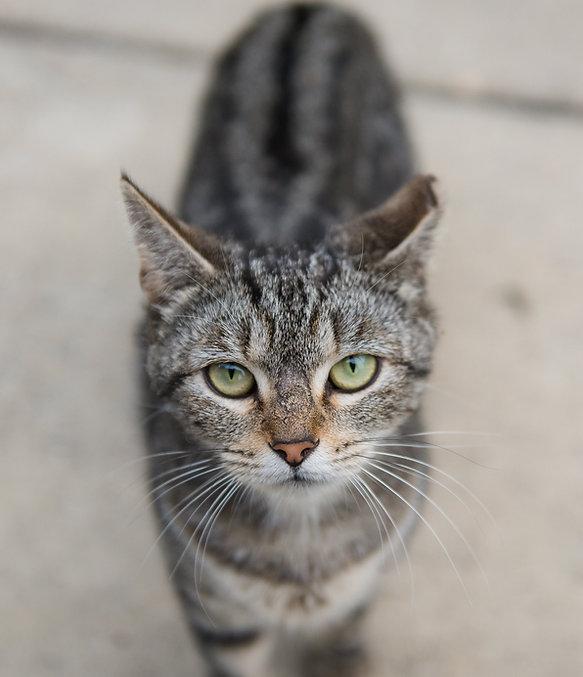 TNR Cat