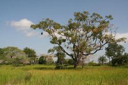 Landscape of Casamance