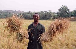 Sierra_Leone_rice_farmer
