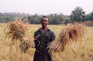 Sierra_Leone_rice_farmer.jpg