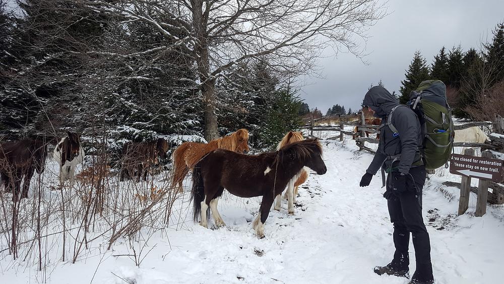 Jordan and the ponies