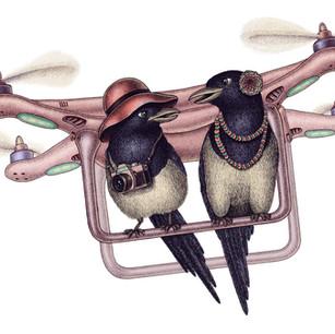 Birds-Travellers