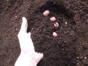 Preparing The Soil For Growth - Part 2
