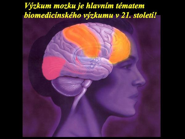 Obrázky mozek moje.001.jpeg