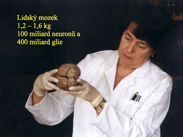 Obrázky mozek moje.002.jpeg