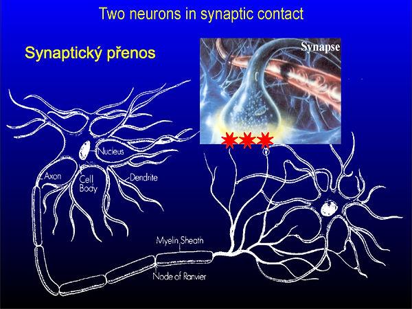 Obrázky mozek moje.004.jpeg
