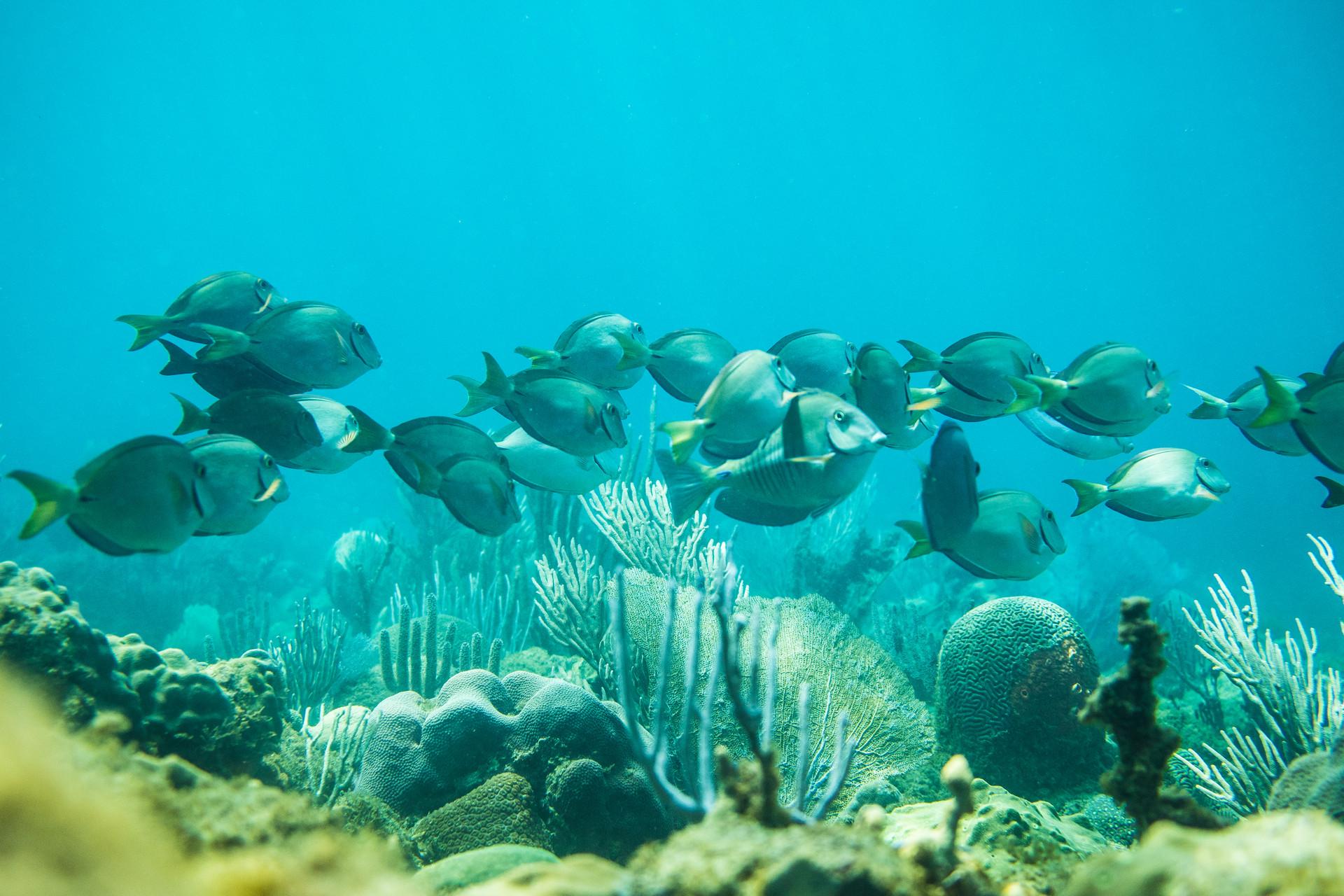 newh schl snorkel-50.jpg