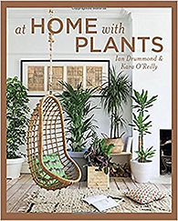 at home with plants, indoor plants, home and plants, plant decorations, urban jungle, cute plants, home plants