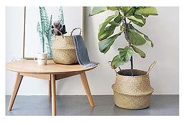 Col Indoor Plants