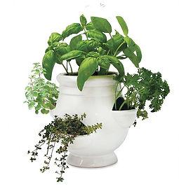 Cute Indoor Plants