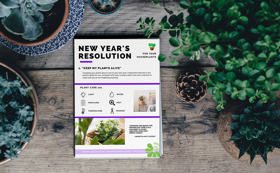 new years resolution, planting guides, plant care guide, plant care, keeping plans alive, houseplant guide, gardening help