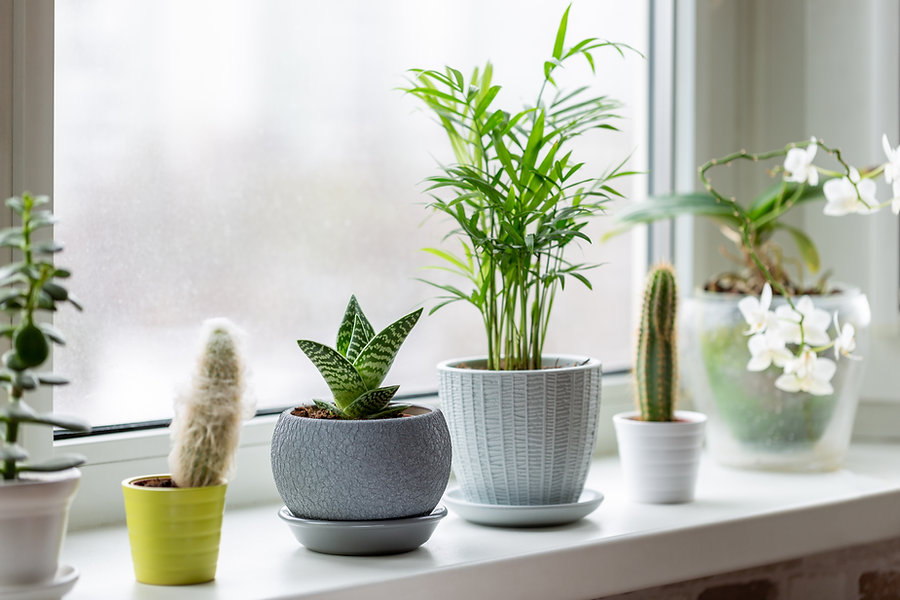 window plants.jpg