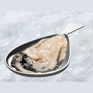 Oyster Shell Spoon