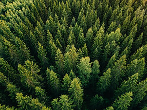 Aerial top view of summer green trees in