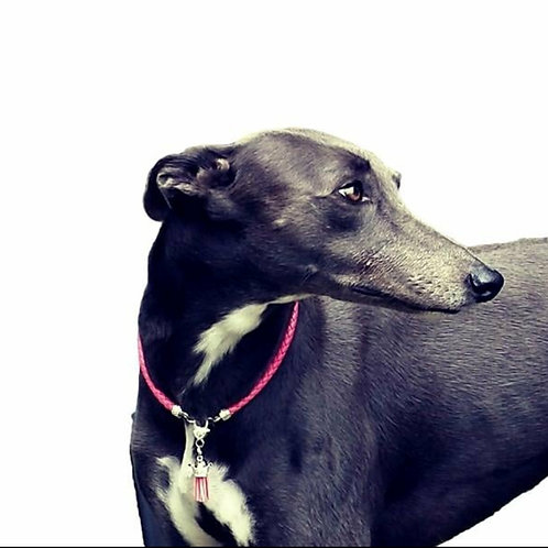 House Collars-Whippet-Red Hot Pet