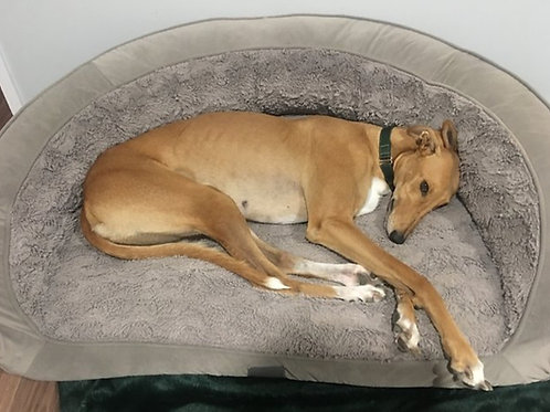 Portsea Bed Designer -Greyhound (also Replacement Covers / Foam)