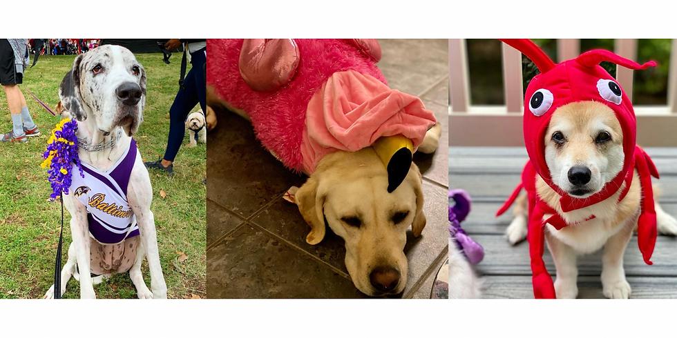 Pet Parade - Fells Point Fun Festival