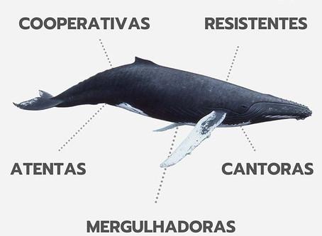 Você é um profissional baleia? 🐋