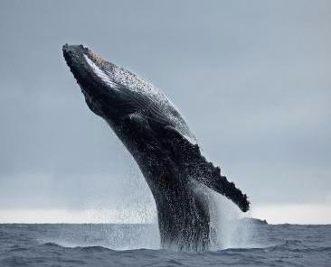 As 5 habilidades das baleias 🐋
