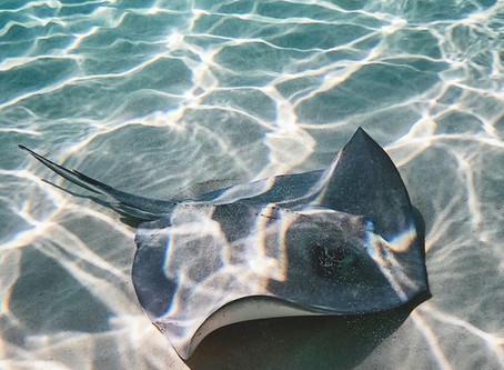 5 dicas para comunicar o oceano de forma inovadora