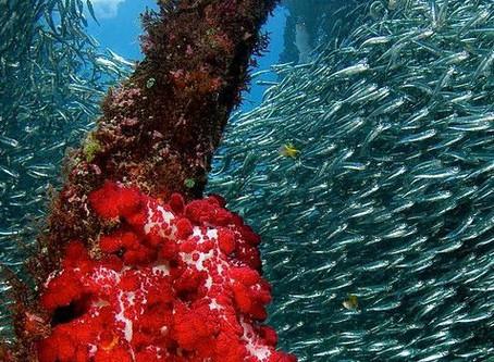 Oceano e biodiversidade