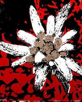 edelweiss rouge.jpg