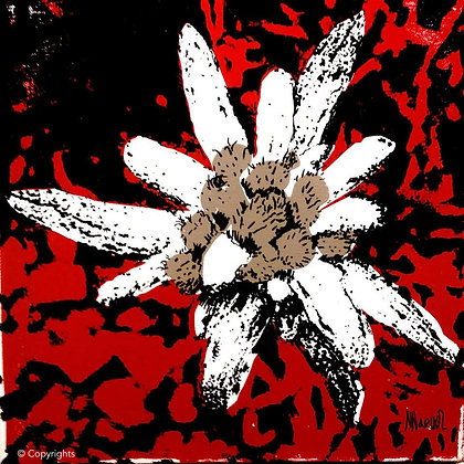 EDELWEISS ROUGE  ( Red edelweiss )