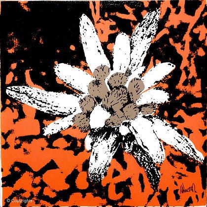 EDELWEISS ORANGE   ( Orange edelweiss )
