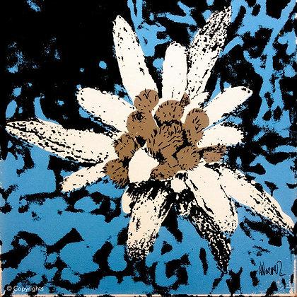 EDELWEISS BLEU   ( Bleu edelweiss )