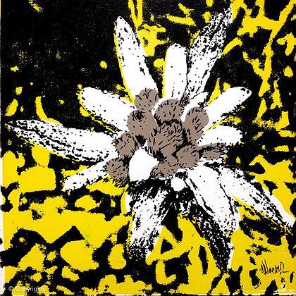 EDELWEISS JAUNE  ( Yellow edelweiss )
