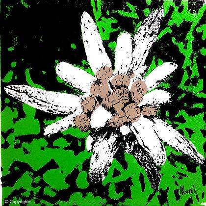 EDELWEISS VERT   ( Green edelweiss )