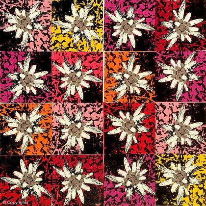 EDELWEISS MULTICOLORE   ( Multicolored edelweiss )