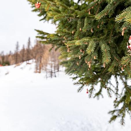 Reportage in Alta Val di Susa. Natale 2020 in quota