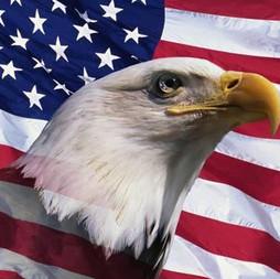 American Bald Eagle and Flag 023