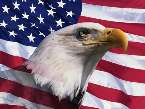 American Bald Eagle and Flag 023