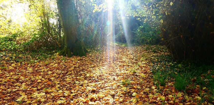 Autumn Leaves falling at Celtic Shamanism Ireland