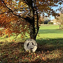 DUNDERRY PARK DRUM UNDER TREE