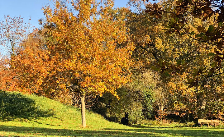DUNDERRY%20AUTUMN%20COLOURS%20_edited.jp