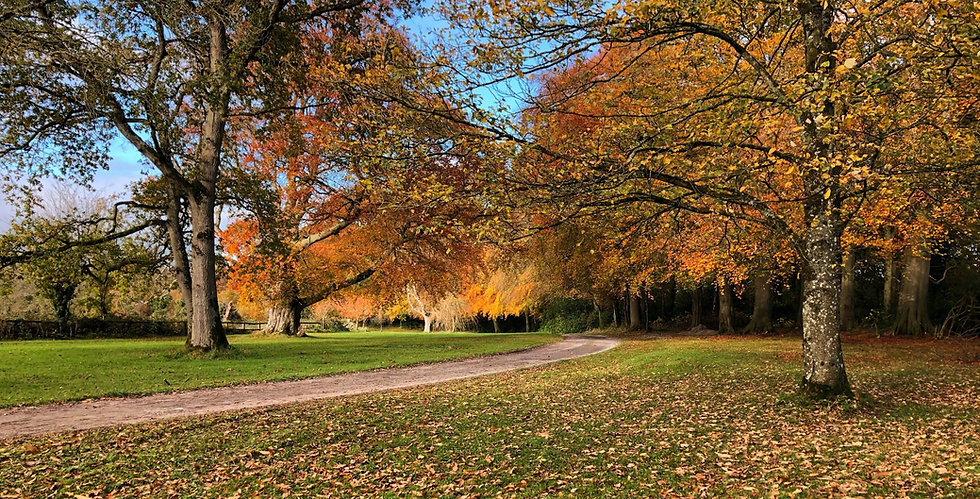 The path into Dunderry Park