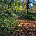 DUNDERRY PARK TREES AUTUMN.jpg